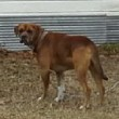 Dog involved in severe biting incident in Vardaman.